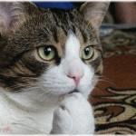 【鬼畜】10代の頃、就職して一人暮らしして、初めて猫を飼った。しかし元彼はその猫が気に入らなかったらしく、私がいない間に蹴りやがった
