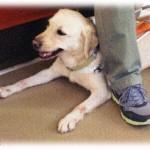 【はぁ?】娘が盲導犬を連れ電車に乗った人に「犬はダメ!」と注意してしまったんだけど、「私の目になるために訓練した犬だからいいんだよ」と言われた。その場には娘の友達やお母さんもいたのに恥をかかされた。障害者って正義厨で嫌だ!