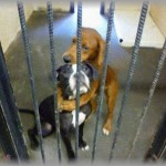 【ちょっといい話】シェルターで身を寄せ合い怯える2匹の犬の写真がフェイスブックに投稿された。「次は私たちの番です。助けて・・・」すると、投稿からわずか2時間6分後・・・!!