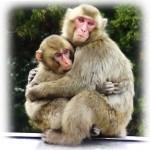 高崎山の猿に学びたい人間の子育ての精神